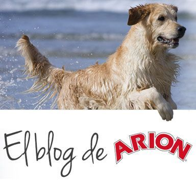 blog de arion